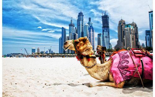 Dubai-(6)