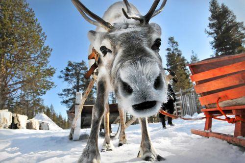 Lapland-(8)