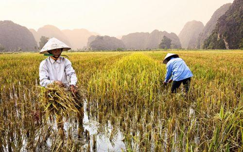 Saigon-(2)