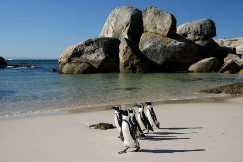 Cape-Town-(9)