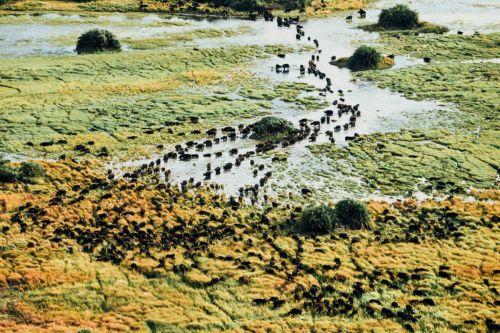 Botswana-(11)
