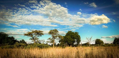 Botswana-(8)