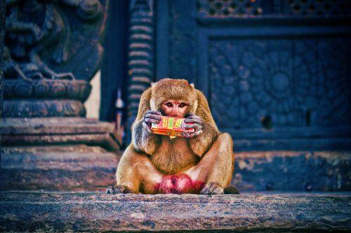 Katmandu-(4)