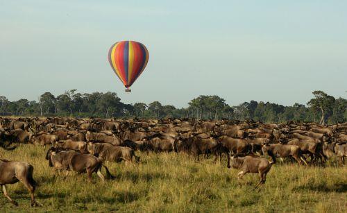 Kenya-(13333333)