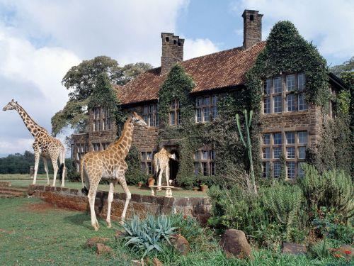 Kenya-(7)