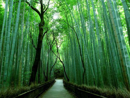Kyoto-(1)