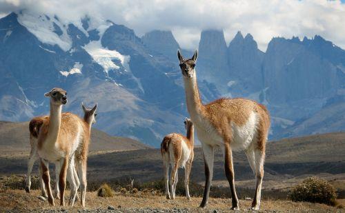 Patagonya-(5)