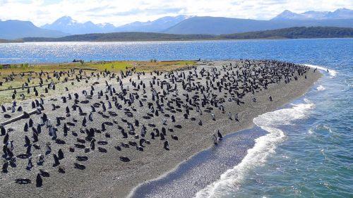 Patagonya-(8)