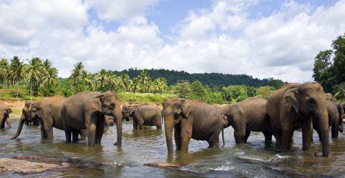 Sri Lanka (2)