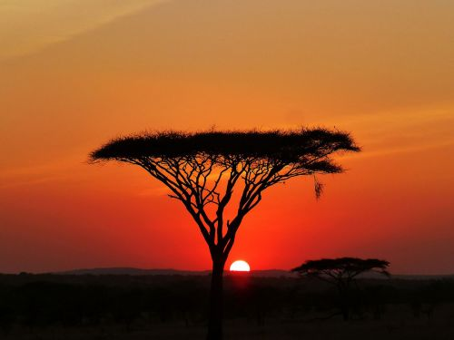 Tanzanya-(1)